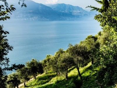Guide to Extra Virgin Olive Oil, How It Is Good for Health?